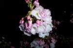 Nighttime flower