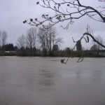 Lewis River Flooding