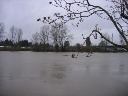 Lewis River Flooding